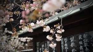 Shikoku: il Cammino degli 88 templi in Giappone