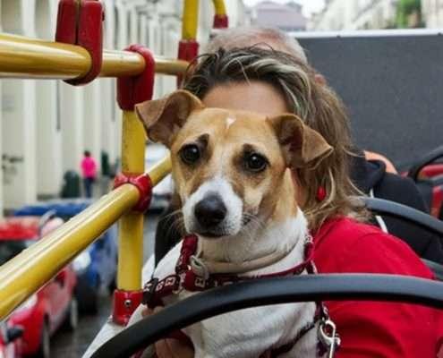 https://www.apiediperilmondo.com/viaggiare-con-il-cane-sui-mezzi-pubblici/