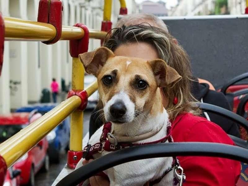 http://www.apiediperilmondo.com/viaggiare-con-il-cane-sui-mezzi-pubblici/