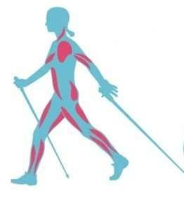muscoli-nordic