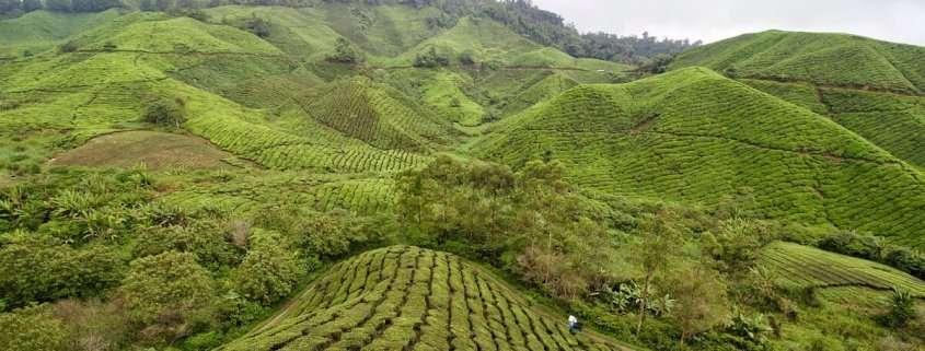 Trekking in Malesia