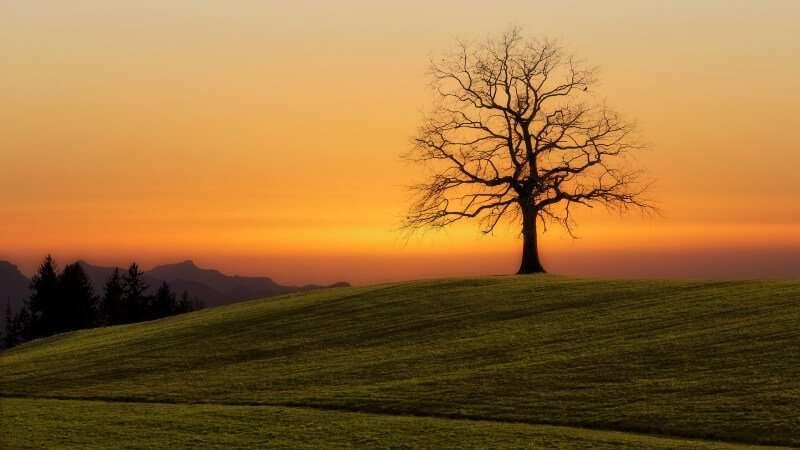La saggezza degli alberi
